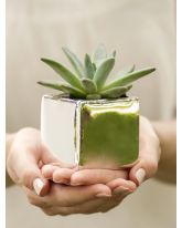 Plain Square Flower Pot 5pk