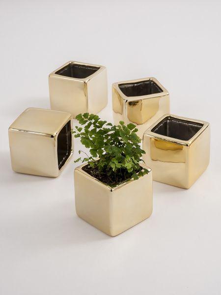 Plain Square Flower Pot 5 pk. - Gold