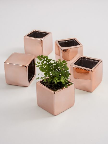 Plain Square Flower Pot 5 pk. - Rose Gold